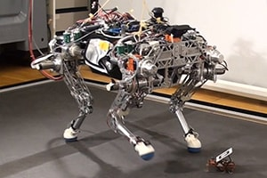 Małe roboty pomagają większym unikać upadków