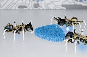 Niesamowicie lekkie motyle i współpracujące mrówki