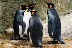penguin-linux
