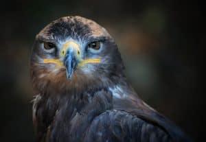 ptakt_polowanie_drapieznik