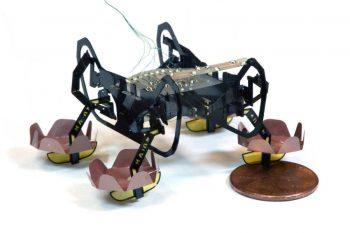 Robot, który potrafi chodzić po wodzie i nurkować