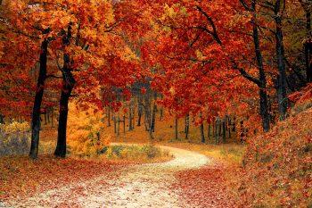 10 najpopularniejszych wpisów z października + bonus