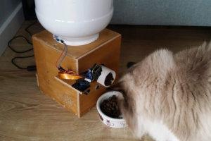 Cat feeder - automatyczny dozownik karmy