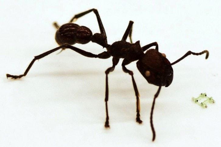 Porównanie miniaturowej konstrukcji do mrówki