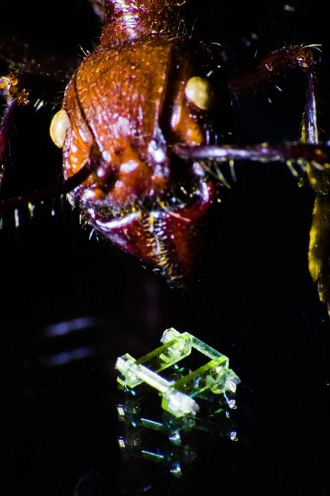Zbliżenie na głowę mrówki oraz miniaturowego robota