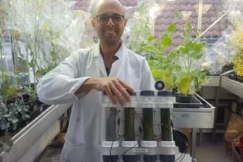 Prace nad ogniwem biofotowoltaicznym wciąż trwają