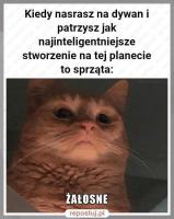 cat.thumb.png.aa9eaaa8e5c110e4eb450f0eb388212b.png