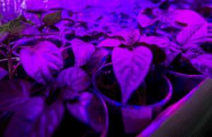 sztuczne ś. fotosynteza.jpg.png