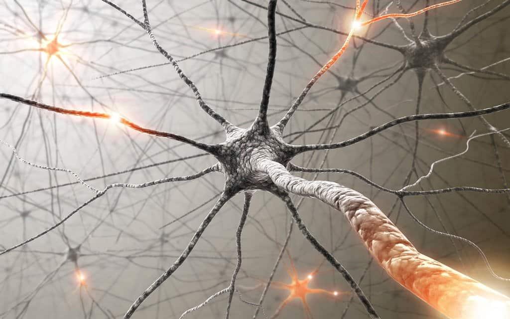 Zrozumieć działanie sieci neuronowej - opis działania sztucznych sieci neuronowych